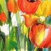frühe Tulpen